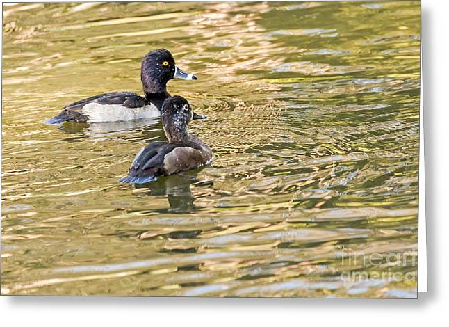 Ring-necked Couple Greeting Card by Kate Brown