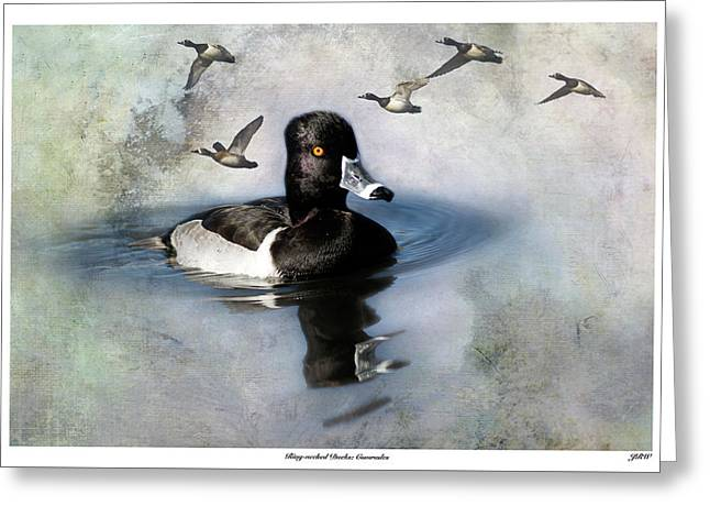 Ring-necked Duck Comrades Greeting Card by John Williams