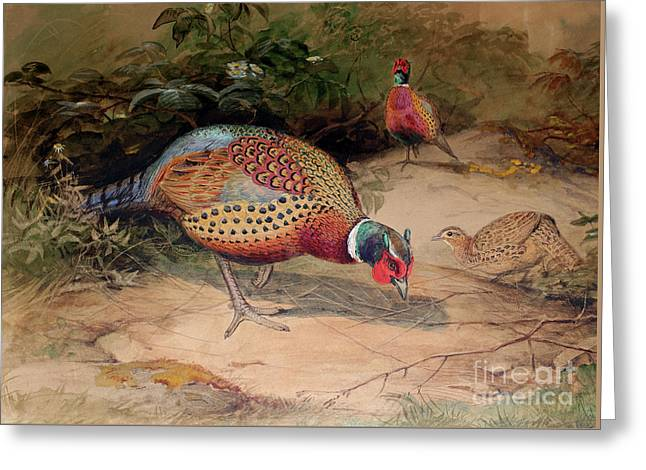 Ring Necked Pheasant Greeting Card by Joseph Wolf
