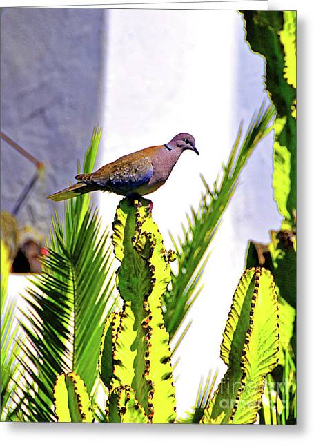 Resting Ring Necked Turtle Dove Greeting Card by Wilf Doyle