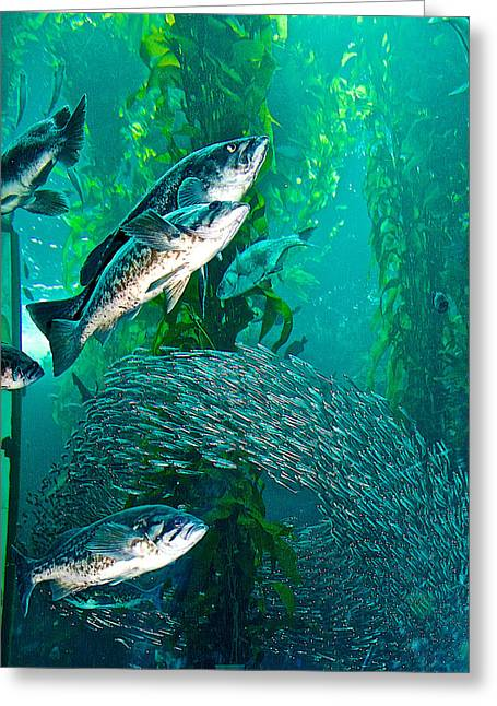 Ring Of Sardines Swim Around Kelp In Monterey Aquarium-california  Greeting Card by Ruth Hager