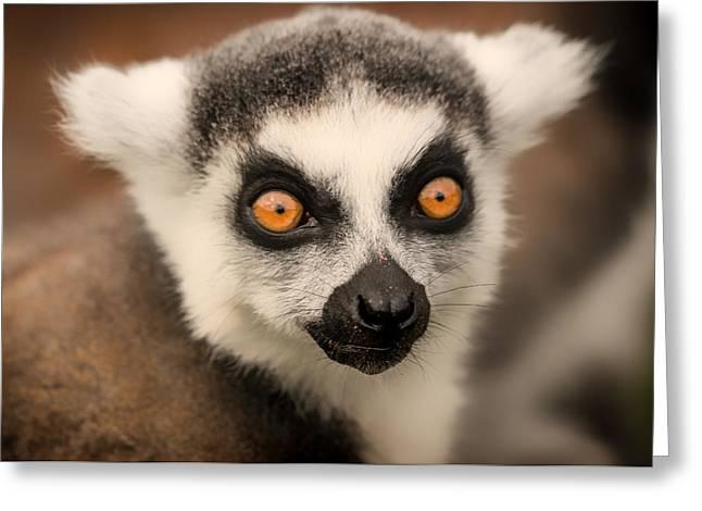 Ring Tailed Lemur Portrait Greeting Card by Chris Boulton