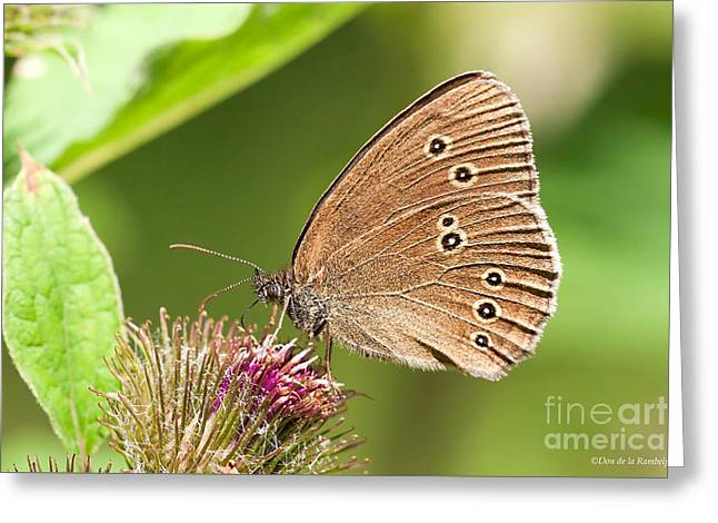 Ringlet  Greeting Card