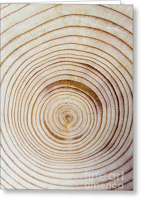 Rings Of A Tree Greeting Card