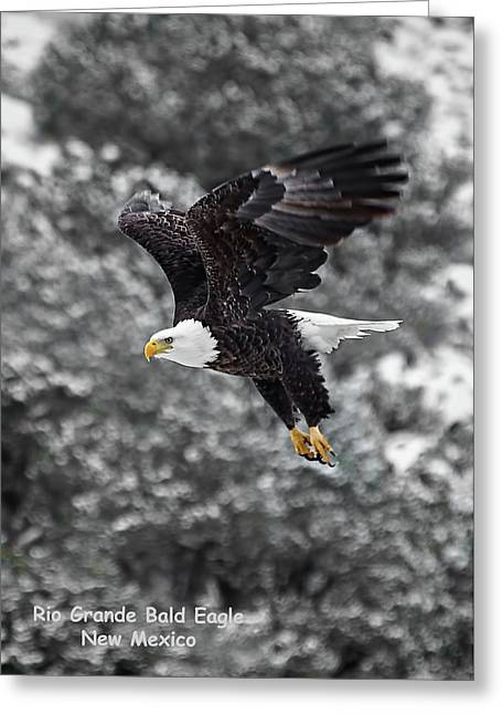 Greeting Card featuring the photograph Rio Grande Bald Eagle by Britt Runyon