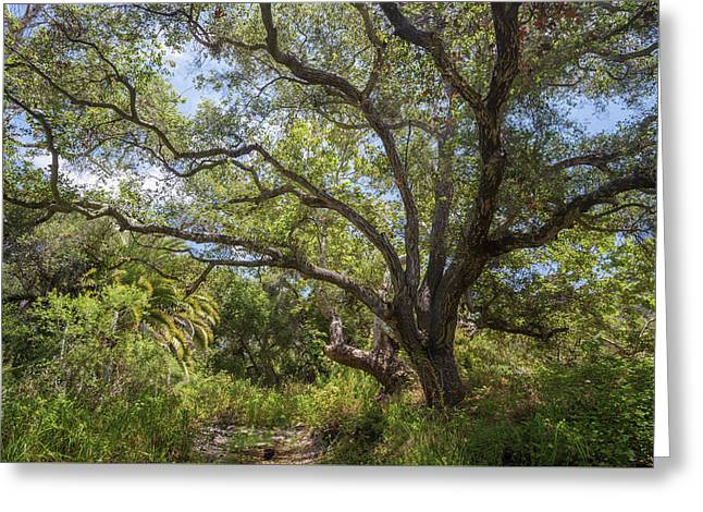 Greeting Card featuring the photograph Riparian Jungle by Alexander Kunz