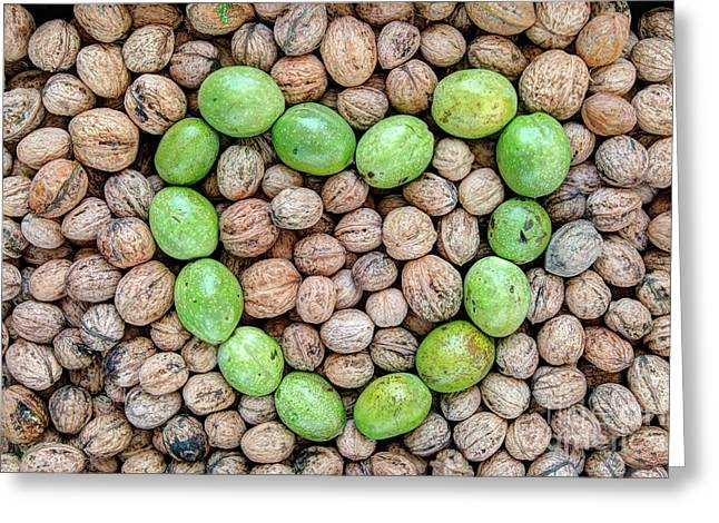 Ripe And Unripe Walnuts Greeting Card by Michal Boubin