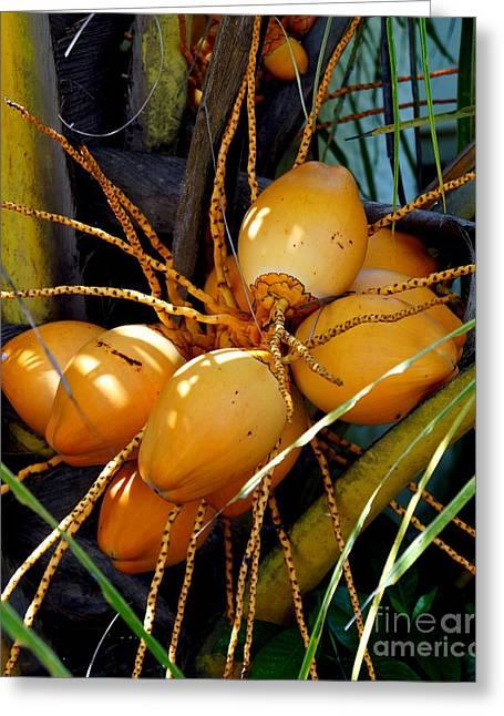 Ripe Golden Dwarf Coconut  Greeting Card by Noa Yerushalmi