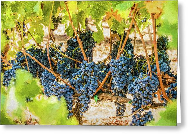 Ripe Grapes On Vine Greeting Card