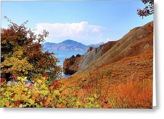 Ripe Wild Rose Hips On The Hillside Of A Quiet Bay, Crimea Greeting Card