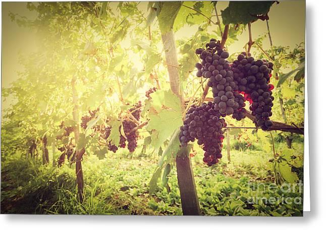 Ripe Wine Grapes On Vines In Tuscany Vineyard, Italy Greeting Card by Michal Bednarek