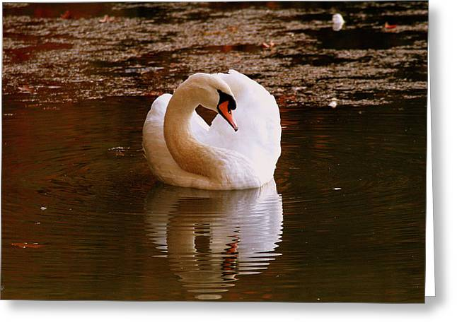 Rippled Reflection Greeting Card by Jason Blalock