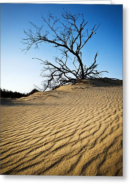 Rippled Sand Dunes Outer Banks Nc - Weathered Greeting Card by Dave Allen