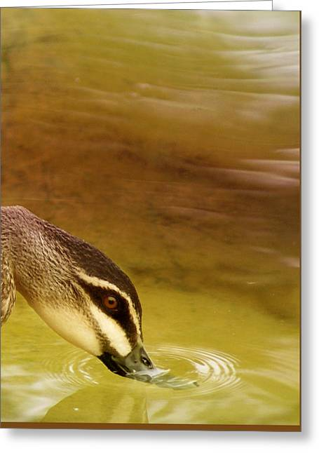 Ripples Greeting Card by Holly Kempe