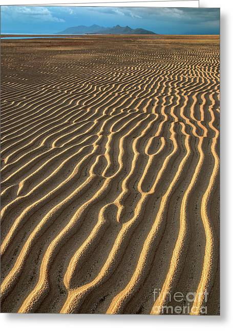 Ripples In Late Sunlight Greeting Card by Spencer Baugh