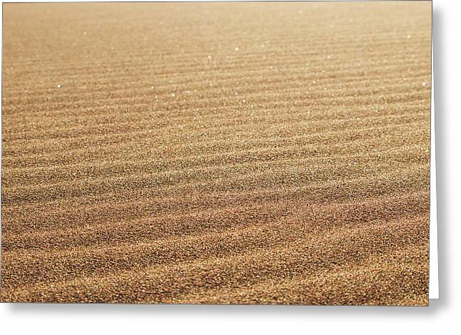 Ripples In The Sand Greeting Card
