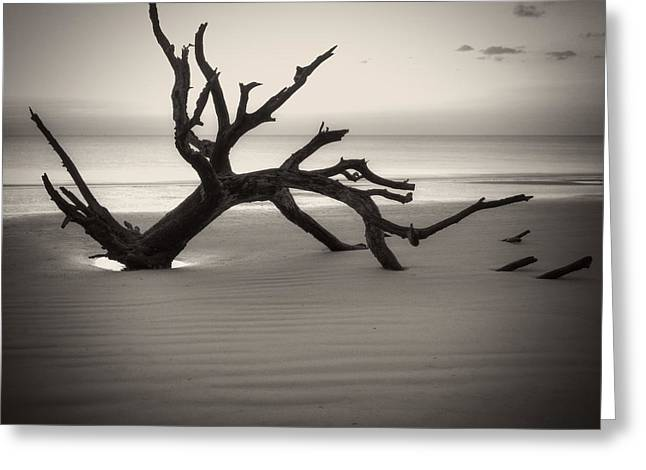 Ripples Of Sand And Driftwood Sepia Greeting Card