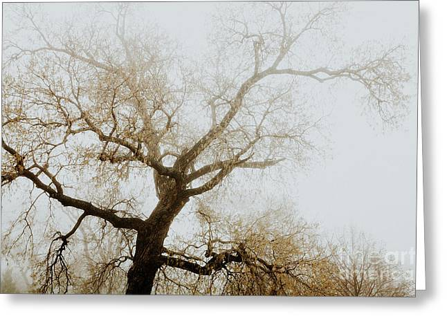 Greeting Card featuring the photograph Rising by Iris Greenwell