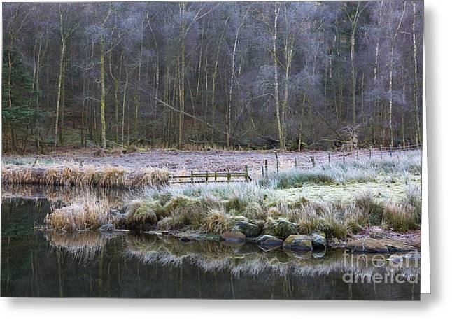 River Brathay Reflections And Silver Birch Greeting Card by Tony Higginson