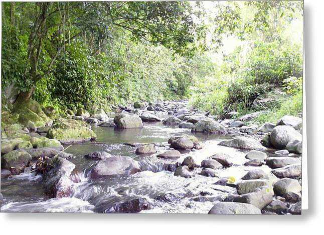River In Adjuntas Greeting Card