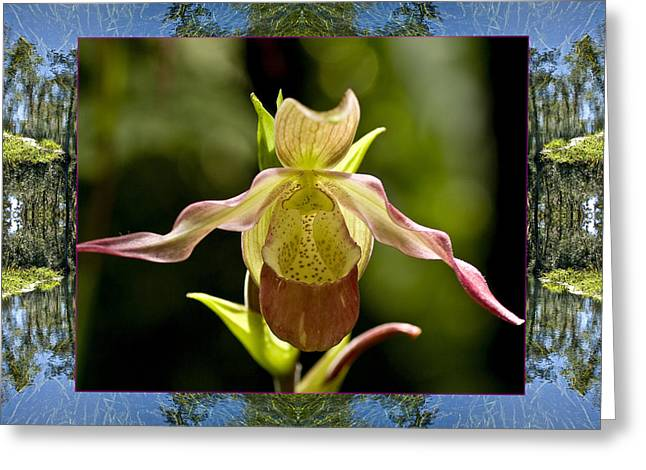 Greeting Card featuring the photograph River Orchid by Bell And Todd