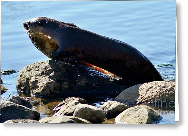 River Otter And Catch Of The Day Greeting Card by Terry Elniski