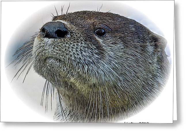 River Otter Greeting Card by Larry Linton
