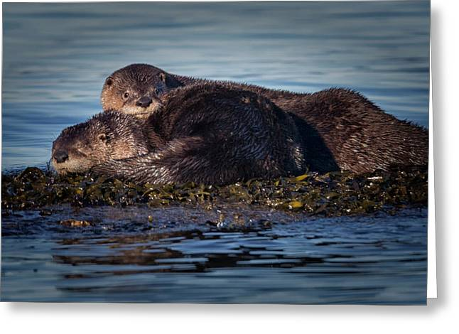 River Otters Greeting Card by Randy Hall