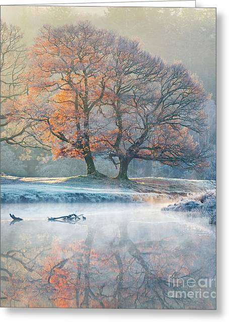 River Reflections - Winter Greeting Card by Tony Higginson