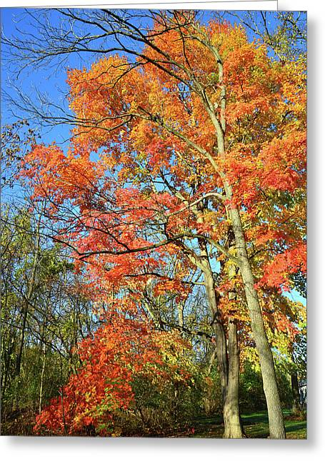 Greeting Card featuring the photograph River Road Maples by Ray Mathis