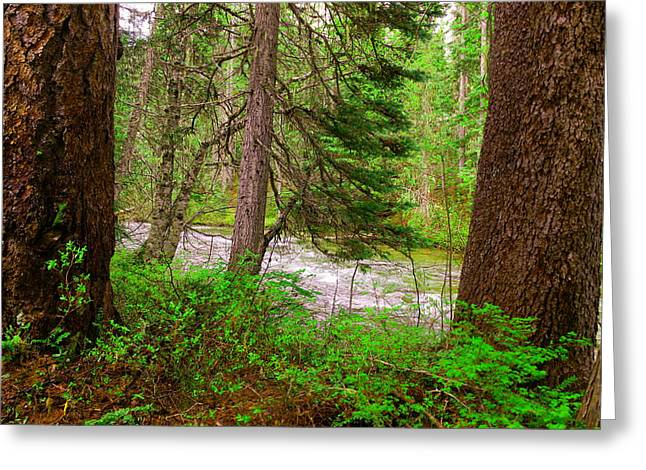 River Through The Forest Greeting Card