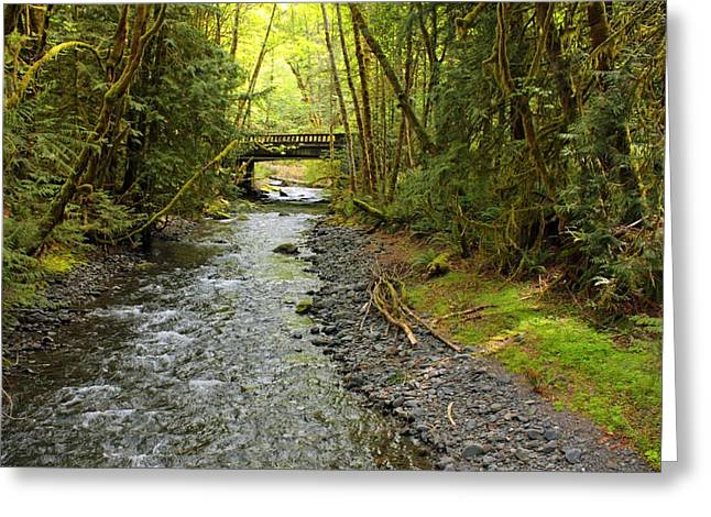 Lake Crescent Greeting Cards - River through the Rainforest Greeting Card by Carol Groenen