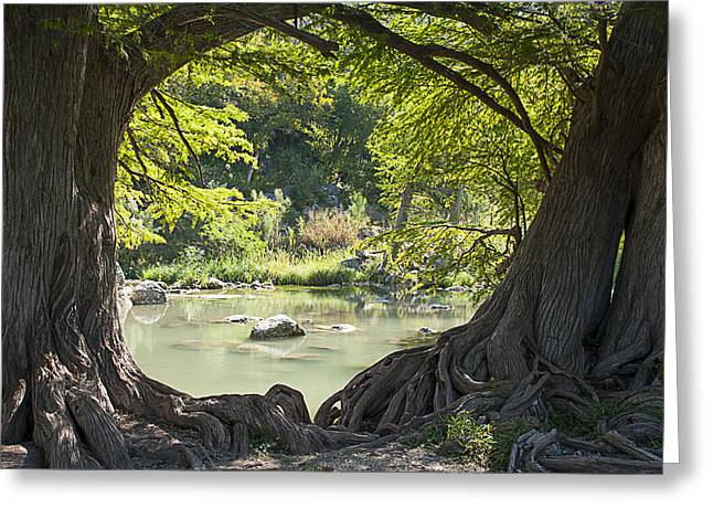River Through Trees Greeting Card