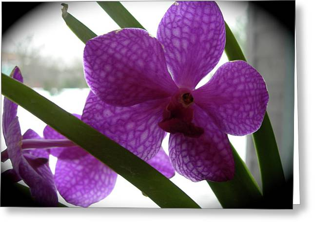 Riverfront Gallery Orchid Greeting Card by Randy Rosenberger