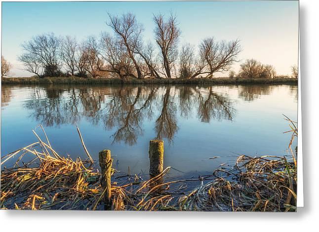 Riverside Trees Greeting Card