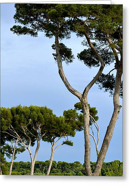 Riviera Trees Greeting Card by Corinne Rhode