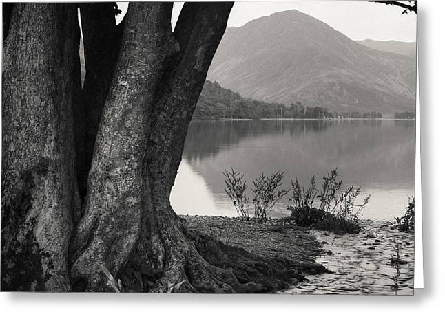 Rivulet To Buttermere Greeting Card by Dave Bowman