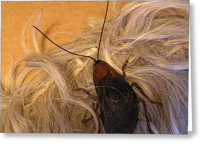 Roach Hair Clip Greeting Card by Roger Swezey