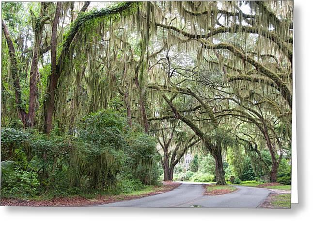 Road Beneath The Oaks Greeting Card