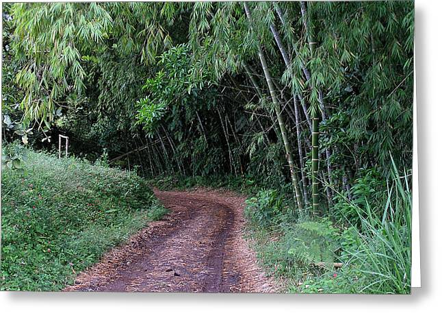 Road Into Bamboo Forest Greeting Card by Jack Herrington