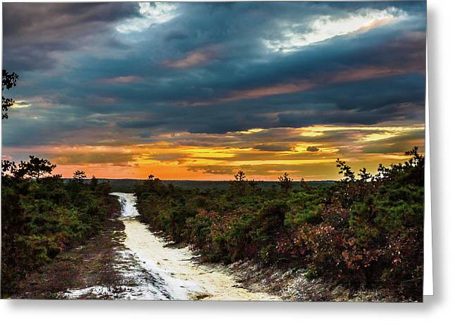 Road Into The Pinelands Greeting Card by Louis Dallara