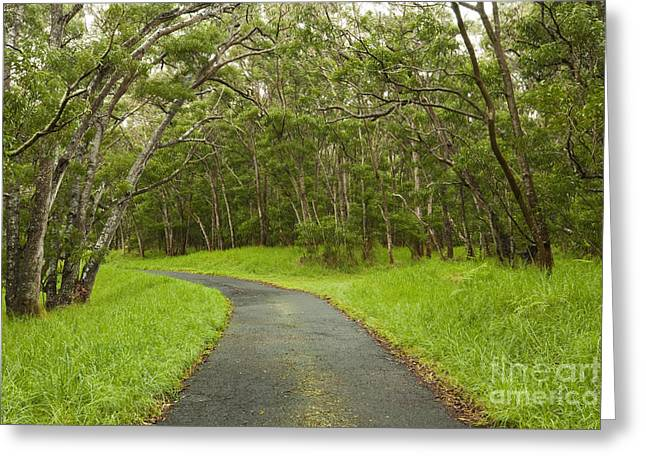 Road Through Koa Tree Forest Greeting Card