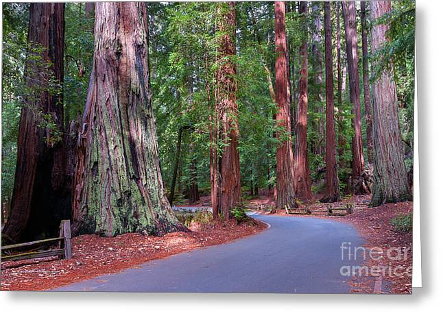 Road Through Redwood Grove Greeting Card