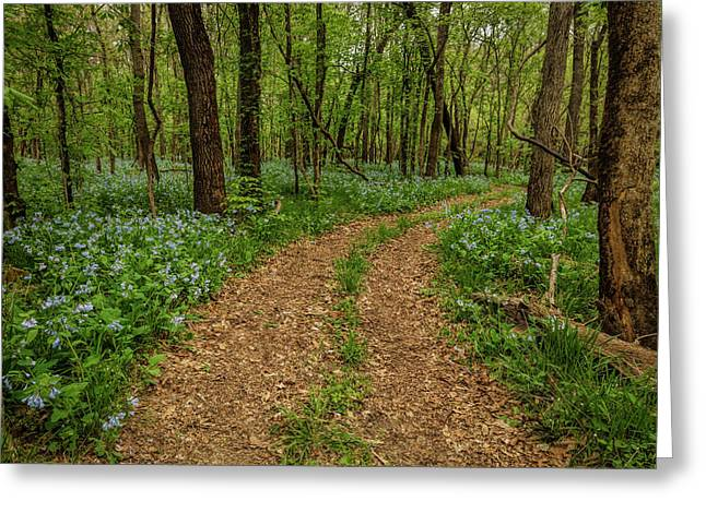 Road Through The Woods Greeting Card by Scott Bean