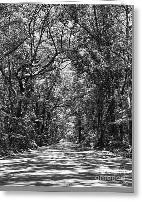 Road To Angel Oak Grayscale Greeting Card
