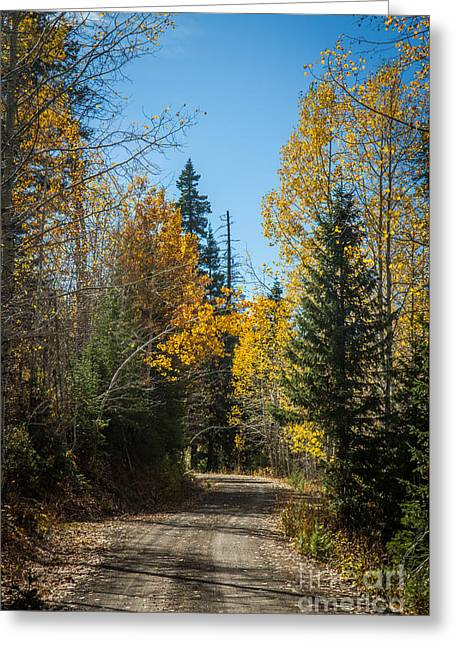 Road To Fall Colors Greeting Card by Robert Bales