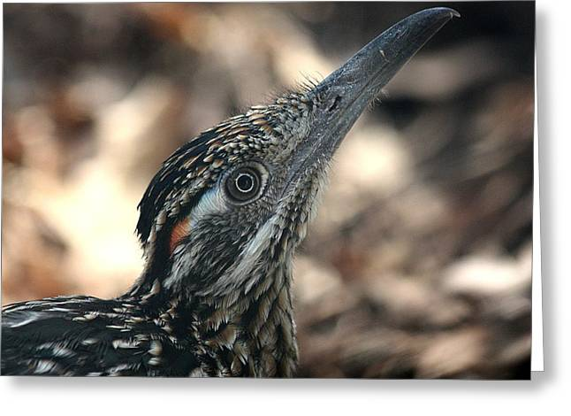 Roadrunner Close-up Greeting Card