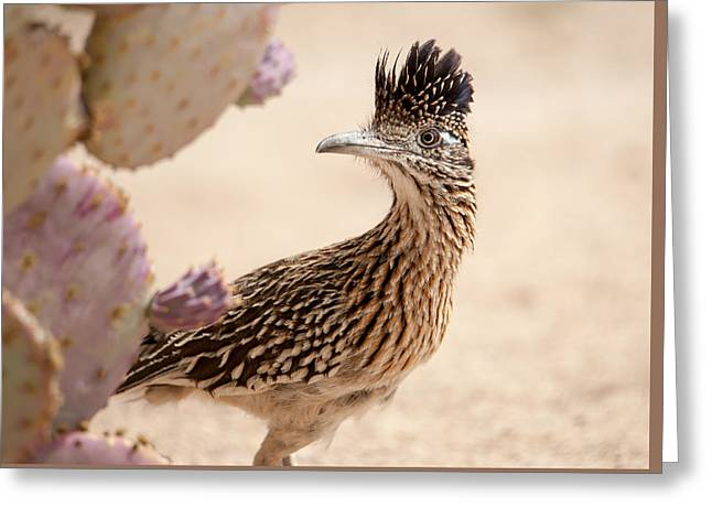Greeting Card featuring the photograph Roadrunner by Dan McManus