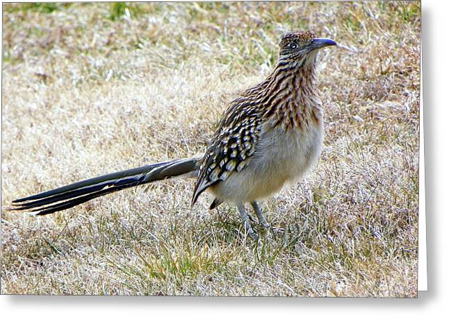 Roadrunner New Mexico Greeting Card
