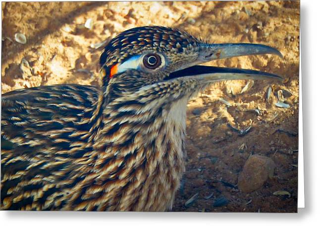 Roadrunner Portrait Greeting Card